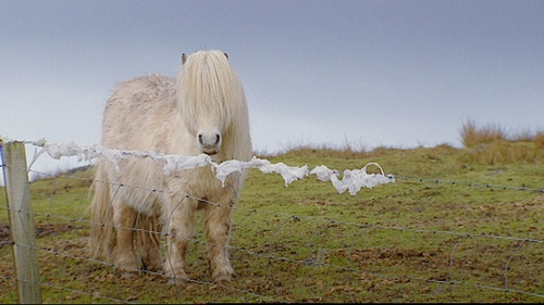 BBC ALBA documentary on Scottish working horses